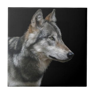 Wolf Portrait Black Background Predator Carnivore Tile