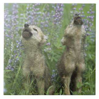 Wolf Puppies Howling In Meadow Ceramic Tile