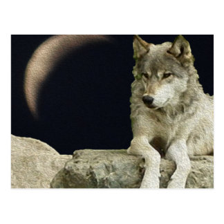Wolf Relaxing Postcard