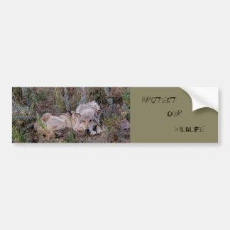 Wolf Resting Bumper Sticker