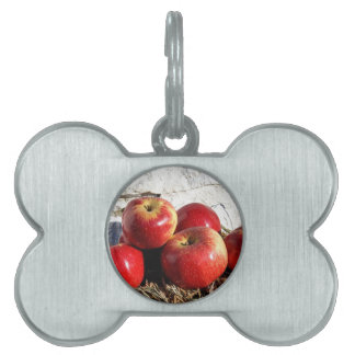 Wolf River Apples Pet Tag