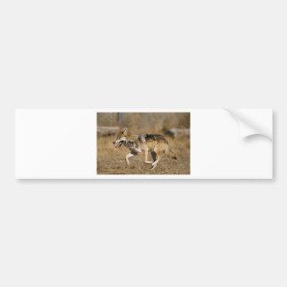 Wolf running bumper sticker