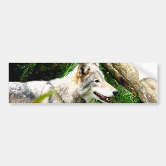 Wolf Smile Bumper Sticker