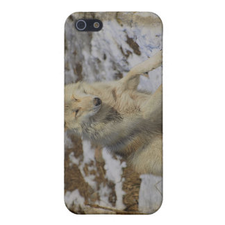 Wolf & Snow Wolf-Lover Wild Animal Alpha Male iPhone 5/5S Cases