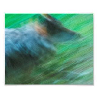 """Wolf Speed 10"""" x 8"""", Kodak Pro Photo Paper (Satin)"""