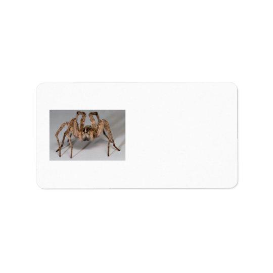 Wolf Spider Label
