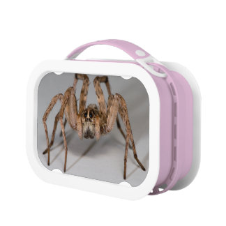 Wolf Spider Lunch Box