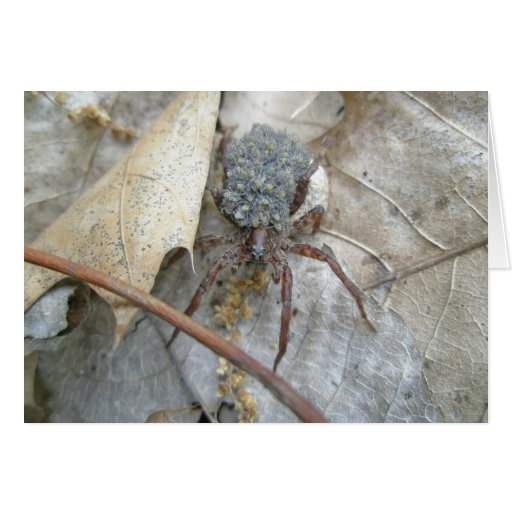 Wolf Spider with Babies on Back Note Card