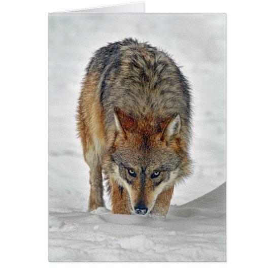 Wolf Stalking Card