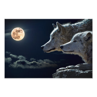 Wolf Wolves Howling at the Full Moon at Night Photo Art