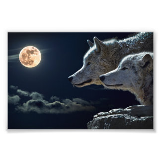 Wolf Wolves Howling at the Full Moon Photograph