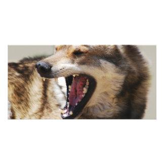 Wolf's Fangs Custom Photo Card