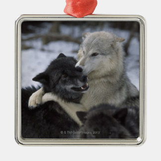 Wolves in the Snow | Montana, USA Metal Ornament