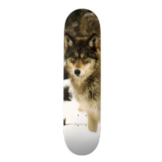 Wolves in The Snow Skateboard Deck