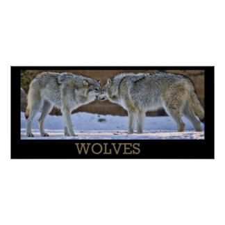 Wolves Of Yellowstone Poster