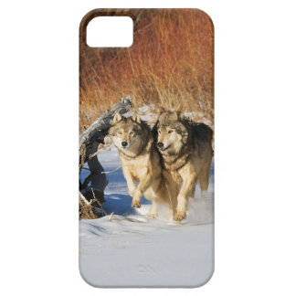 Wolves Running in Snow iPhone 4 Case