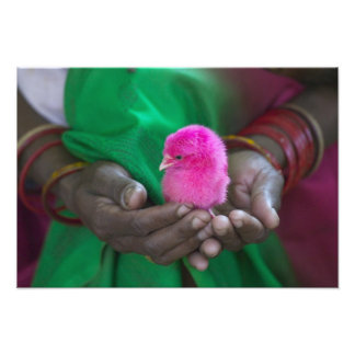 Woman holding a little chick painted with holy photo print