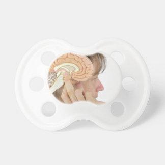 Woman holding hemisphere model  against head dummy