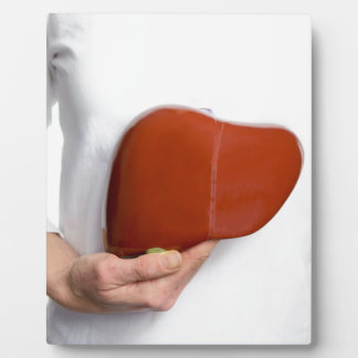 Woman holding human liver model at white body plaque