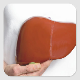 Woman holding human liver model at white body square sticker