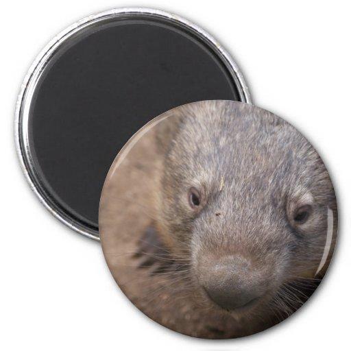 Wombat Kiss Magnet