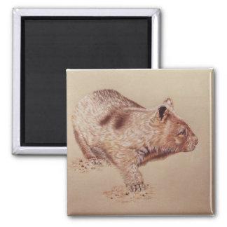 Wombat Square Magnet