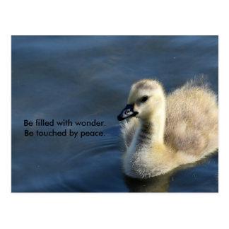 Wonder and Peace Postcard
