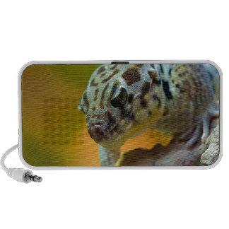 wonder-gecko-2560 notebook speaker