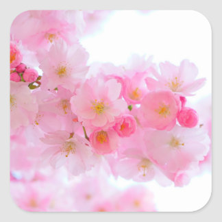 Wonderful Pink Japanese Cherry Blossom Square Sticker