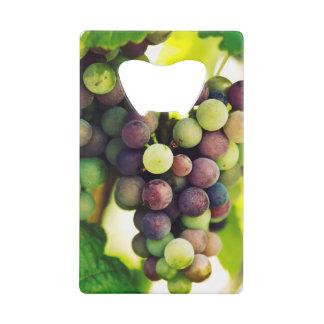 Wonderful Vine Grapes,  Autumn Fall Sun