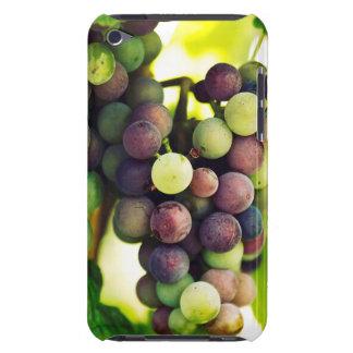 Wonderful Vine Grapes,  Autumn Fall Sun iPod Touch Case-Mate Case