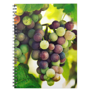 Wonderful Vine Grapes,  Autumn Fall Sun Notebooks