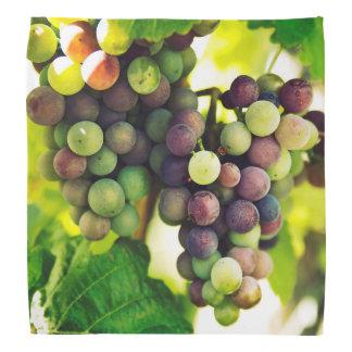 Wonderful Vine Grapes, Nature, Autumn Fall Sun Bandana