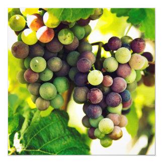Wonderful Vine Grapes, Nature, Autumn Fall Sun Card