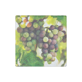 Wonderful Vine Grapes, Nature, Autumn Fall Sun Stone Magnet