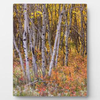 Wonderful Woods Wonderland Plaque