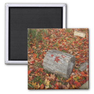Wood  and Fallen leaves Square Magnet