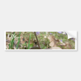 Wood Anemone Bumper Sticker