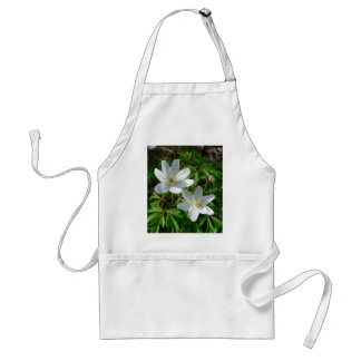 Wood Anemone In The Grass Aprons
