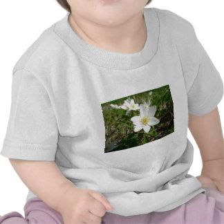 Wood Anemone Several Whte Flowers Tshirts