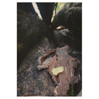 wood cave wood poster