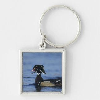 Wood Duck, Aix sponsa,male calling, New Key Ring