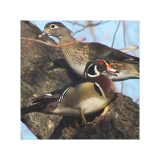 Wood duck canvas