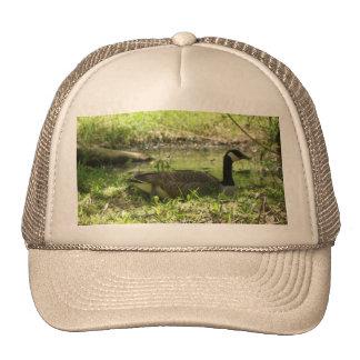 WOOD DUCK CAP