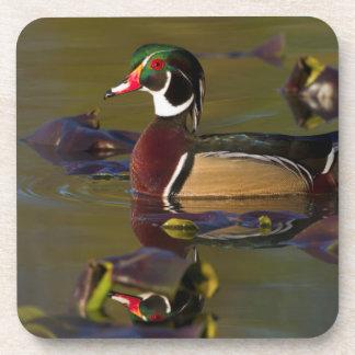Wood Duck Drake 1 Drink Coasters