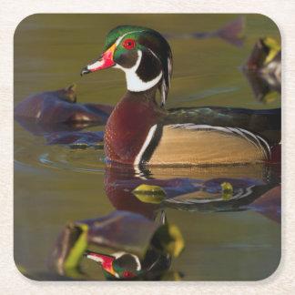 Wood Duck Drake 1 Square Paper Coaster