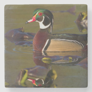 Wood Duck Drake 1 Stone Beverage Coaster