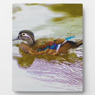 Wood Duck Hen Plaques