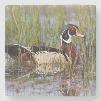 Wood Duck in wetland Stone Beverage Coaster