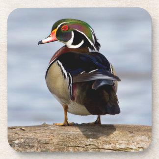 Wood Duck male on log in wetland Beverage Coaster